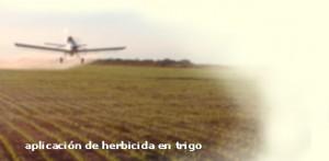 Aplicación de herbicida en Trigo